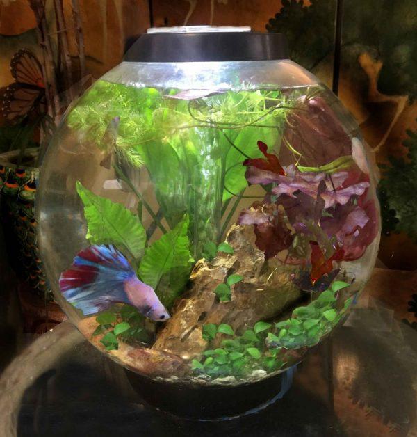 BIorbfish