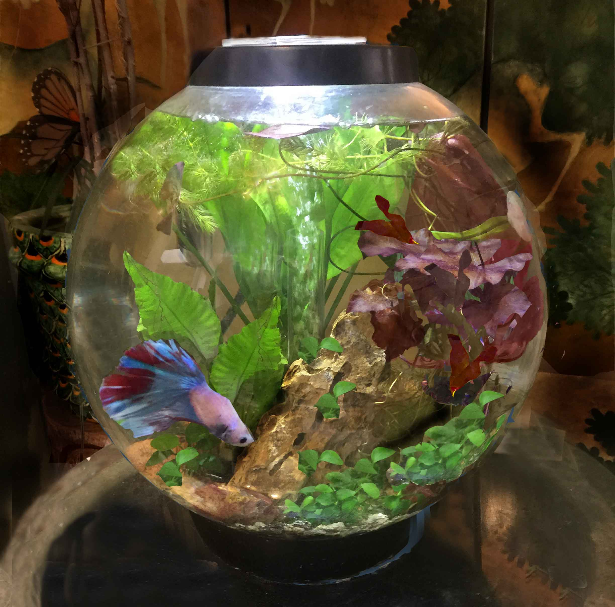 Into the Deep.. Bring a bit of nature into your home or office with our Natural  Aquascapes.  Our low tech tanks and vases are designed to grow as nature intended.