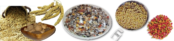 Parrotlets need dry food too.  A seed mix for small parrots is essential as well as millet, nuts, and a small percentage of a pelleted diet.